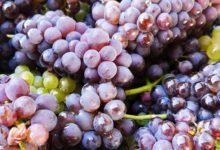 Photo of Mario's Wijnkeuze : De beste frisse witte wijnen komen uit het Noorden van Italië!