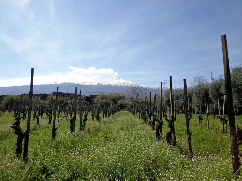 Photo of Grape Hops Tours : Gastronomische tours in Italië