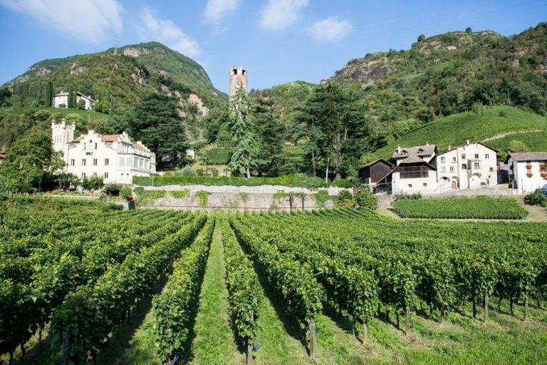 Photo of Alto Aldige en haar heerlijke Pinot Grigio en Bianco wijnen