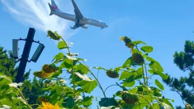 Photo of Deze week vliegen naar Italië voor 17 €… Het kan !